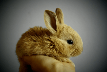 Wellness Care for Your Pet Rabbit in Humble, Texas
